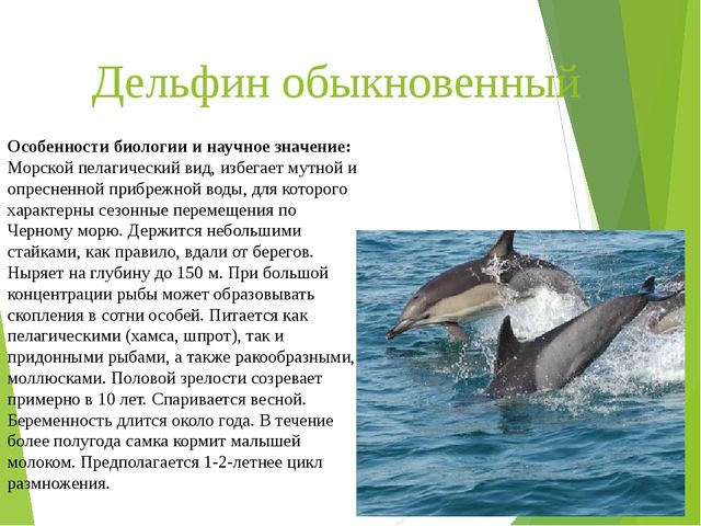 Дельфин обыкновенный Особенности биологии и научное значение: Морской пелагич...