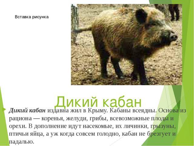 Дикий кабан Дикий кабаниздавна жил в Крыму. Кабаны всеядны. Основа из рацион...