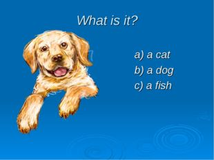 What is it? a) a cat b) a dog c) a fish