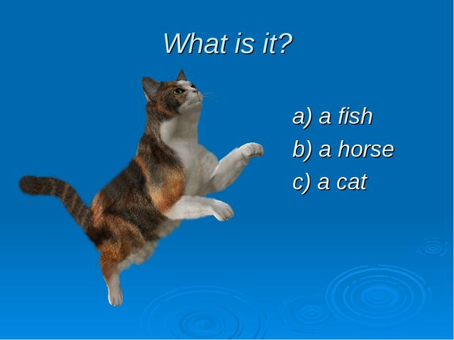 What is it? a) a fish b) a horse c) a cat
