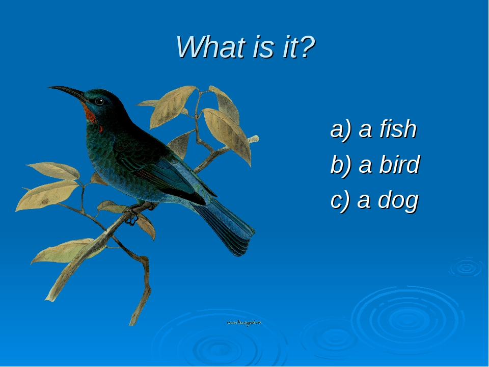 What is it? a) a fish b) a bird c) a dog