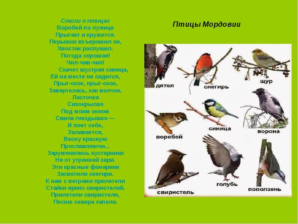 переднем плане, птицы мордовии фото с названиями именем для крохи