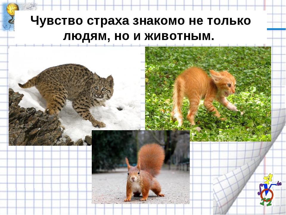 Чувство страха знакомо не только людям, но и животным.