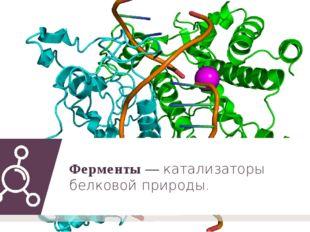 Ферменты — катализаторы белковой природы.