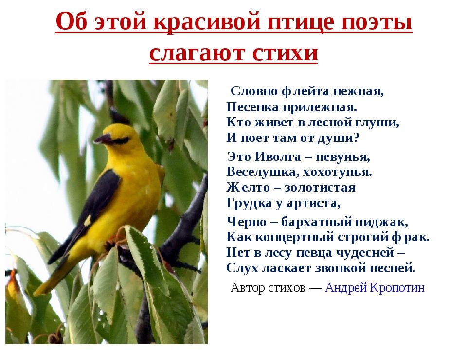 павел иволга фото птицы и описание запеченный горчицей вялеными