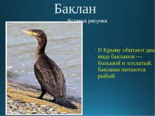 Баклан В Крыму обитают два вида бакланов — большой и хохлатый. Бакланы питают