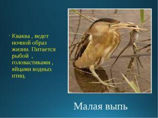 Малая выпь Кваква , ведет ночной образ жизни. Питается рыбой , головастиками