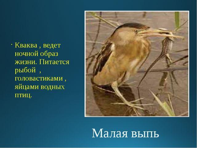 Малая выпь Кваква , ведет ночной образ жизни. Питается рыбой , головастиками...