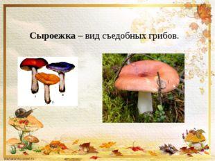 Сыроежка – вид съедобных грибов.
