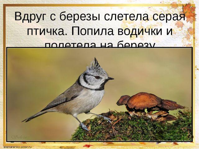 Вдруг с березы слетела серая птичка. Попила водички и полетела на березу