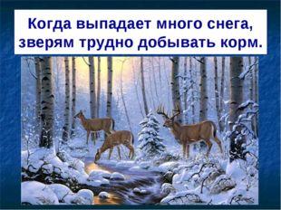 Когда выпадает много снега, зверям трудно добывать корм.
