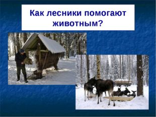Как лесники помогают животным?