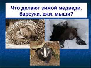Спят в берлогах и норах медведи, барсуки, ежи, мыши. Что делают зимой медведи