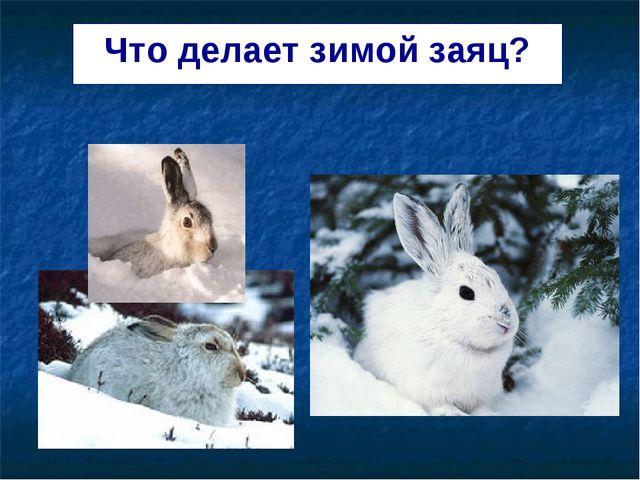Что делает зимой заяц?