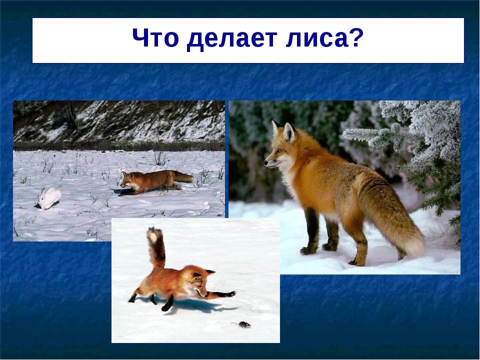 Что делает лиса?