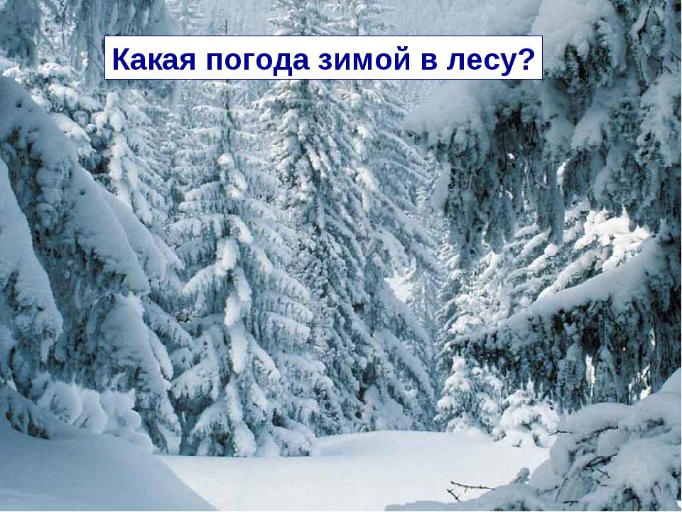 Какая погода зимой в лесу?