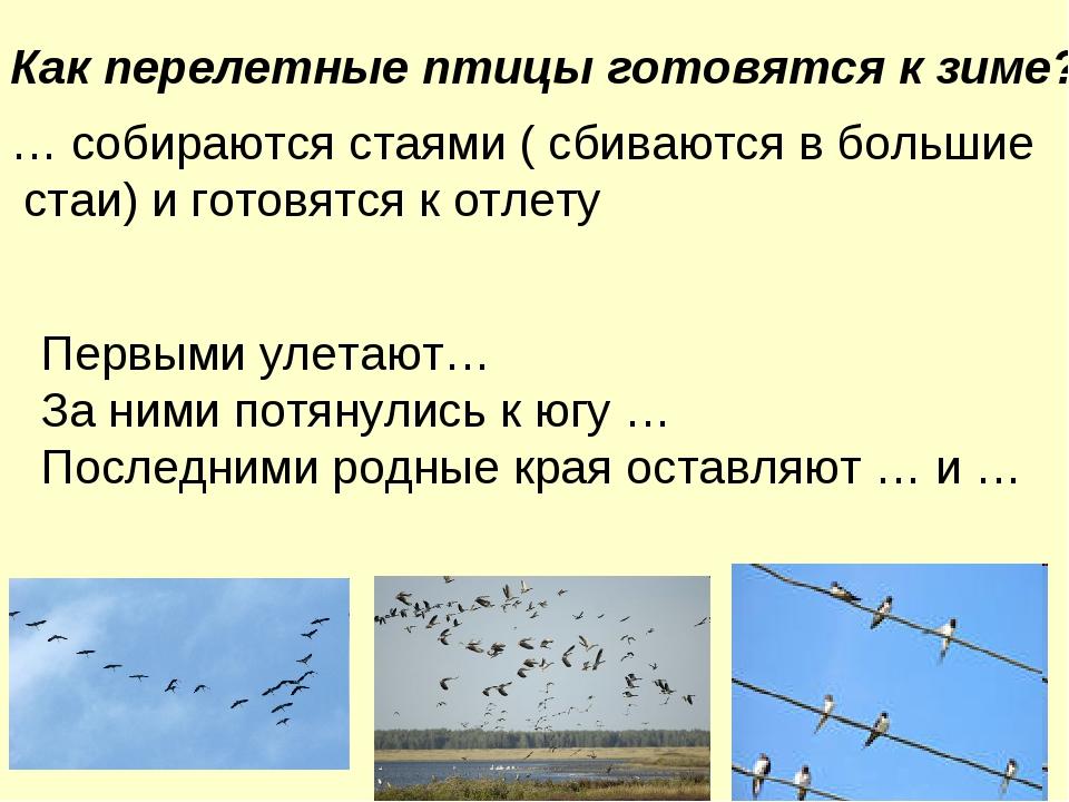 Как перелетные птицы готовятся к зиме? … собираются стаями ( сбиваются в боль...