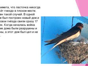 Есть примета, что ласточка никогда не совьёт гнездо в плохом месте. Известен