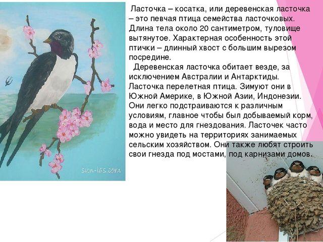 Ласточка – косатка, или деревенская ласточка – это певчая птица семейства ла...
