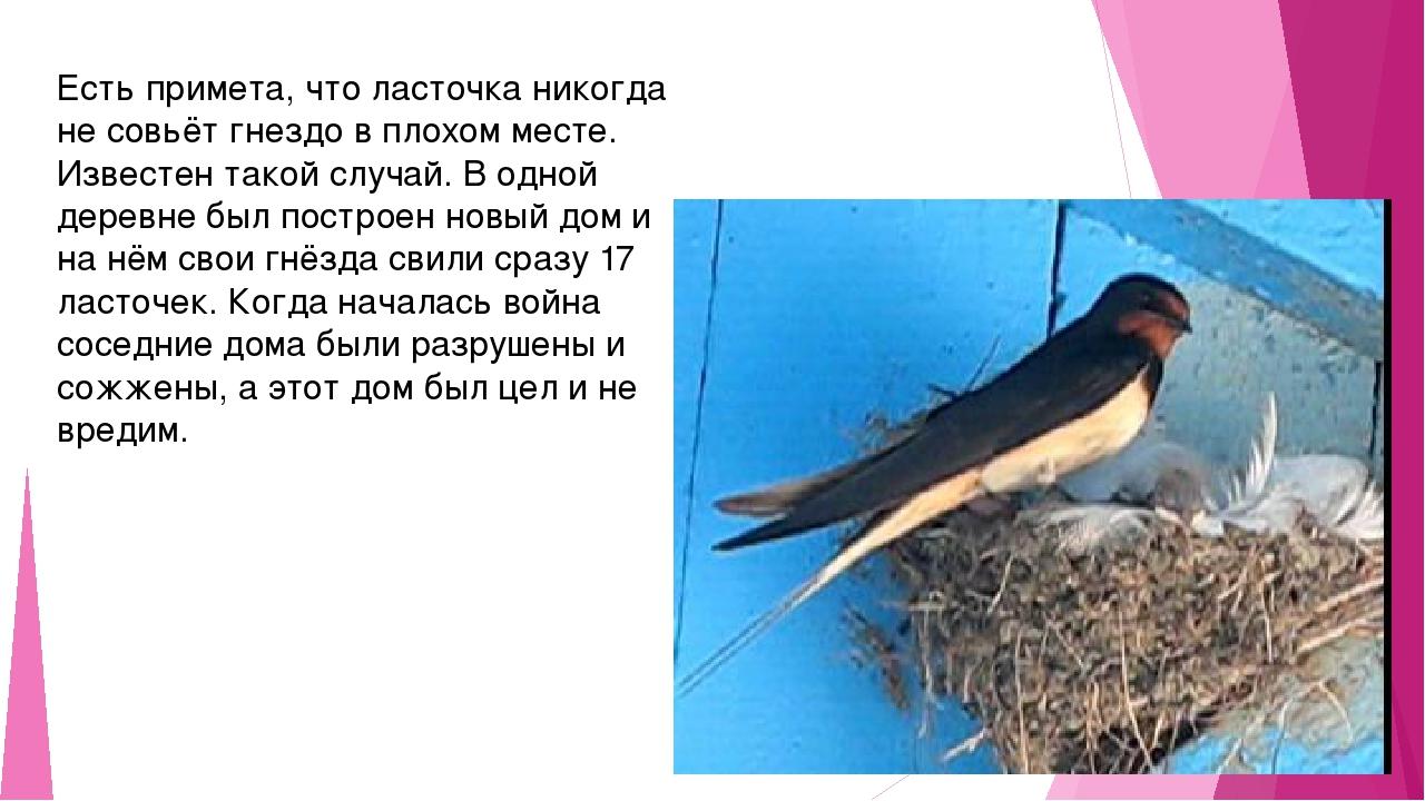 Есть примета, что ласточка никогда не совьёт гнездо в плохом месте. Известен...