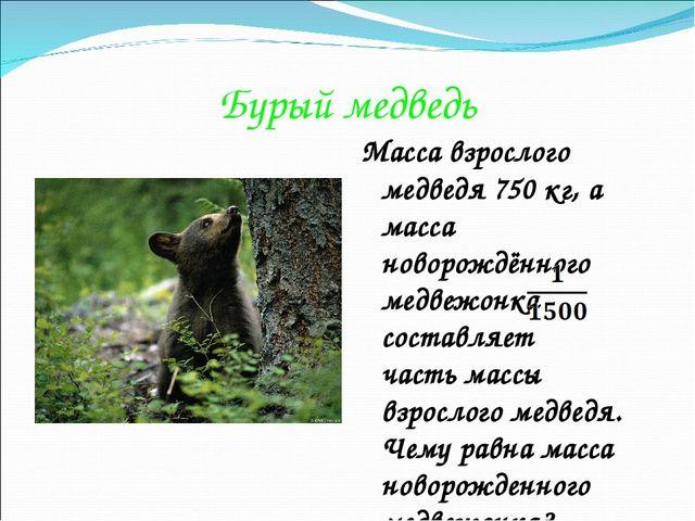 Бурый медведь Масса взрослого медведя 750 кг, а масса новорождённого медвежон...