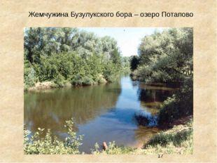 Жемчужина Бузулукского бора – озеро Потапово
