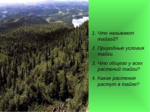 Что называют тайгой? Природные условия тайги. Что общего у всех растений тайг