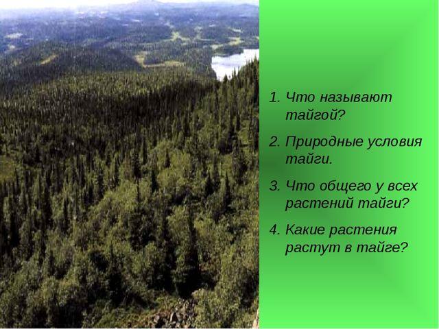 Что называют тайгой? Природные условия тайги. Что общего у всех растений тайг...
