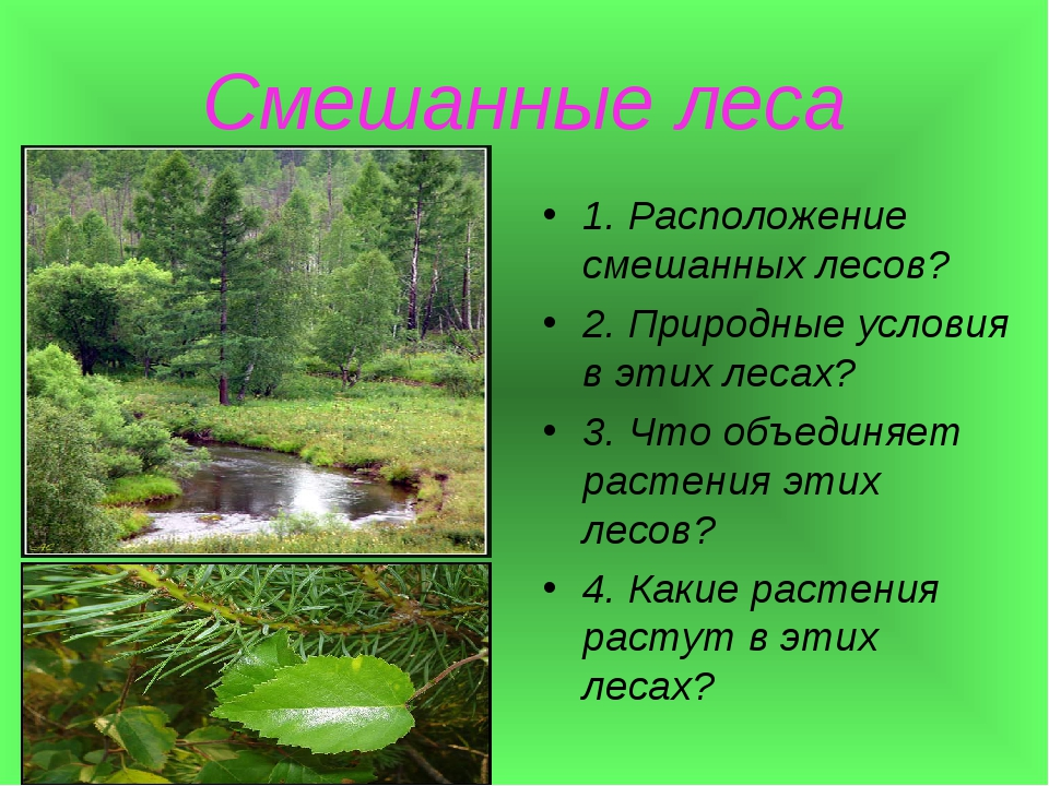 Смешанные леса 1. Расположение смешанных лесов? 2. Природные условия в этих л...