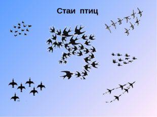 Стаи птиц