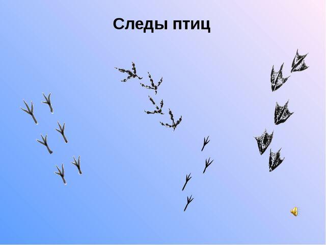 Следы птиц