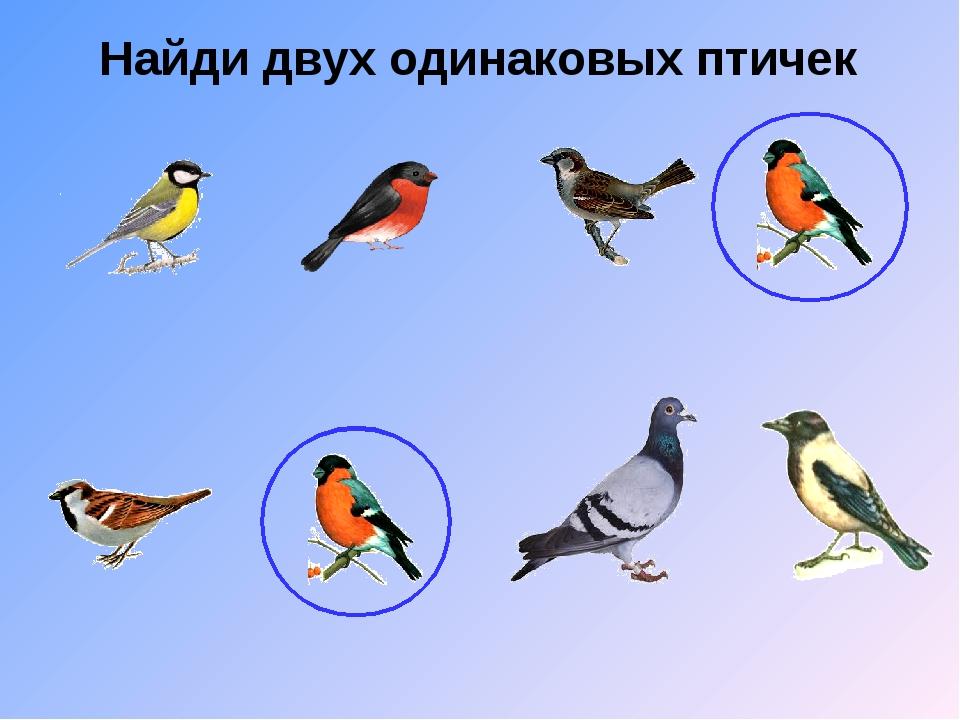 Найди двух одинаковых птичек