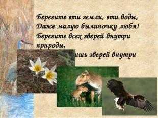 Берегите эти земли, эти воды, Даже малую былиночку любя! Берегите всех зверей