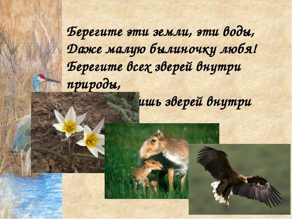 Берегите эти земли, эти воды, Даже малую былиночку любя! Берегите всех зверей...