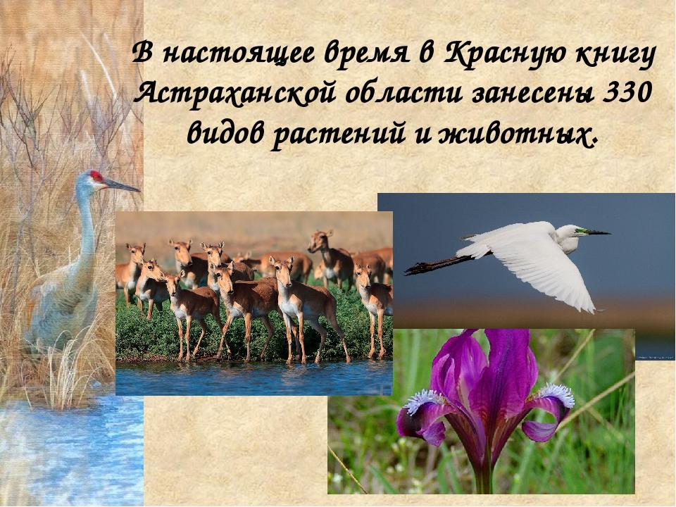 В настоящее время в Красную книгу Астраханской области занесены 330 видов рас...