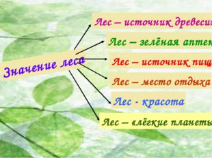 Значение леса Лес – источник древесины Лес – зелёная аптека Лес – место отдых