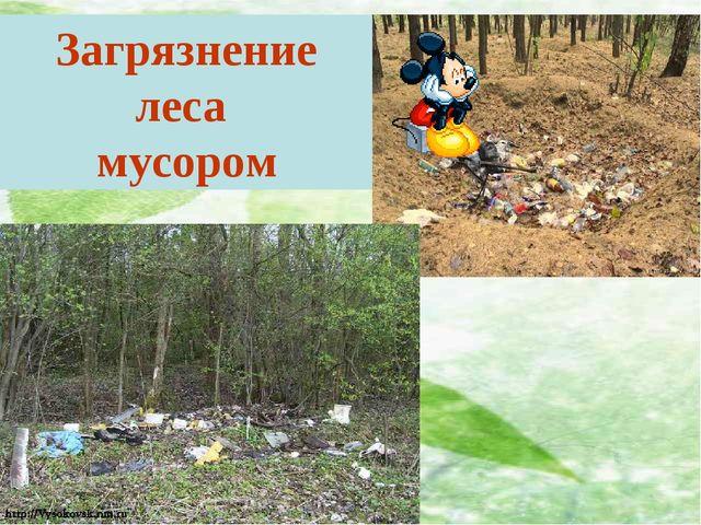 Загрязнение леса мусором