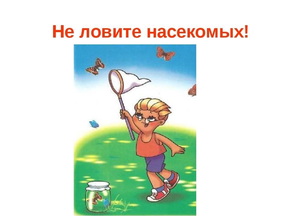 Не ловите насекомых!