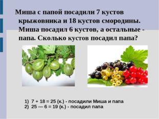 1) 7 + 18 = 25 (к.) - посадили Миша и папа 2) 25 — 6 = 19 (к.) - посадил папа