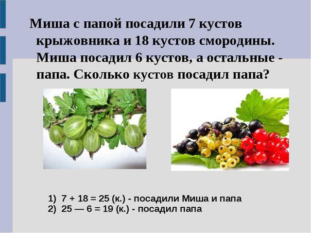 1) 7 + 18 = 25 (к.) - посадили Миша и папа 2) 25 — 6 = 19 (к.) - посадил папа...