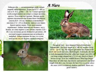 За́яц-руса́к— млекопитающее рода зайцев отрядазайцеобразных. Длина тела 57