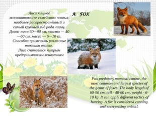 Лисахищное млекопитающеесемействапсовых, наиболее распространённый и са