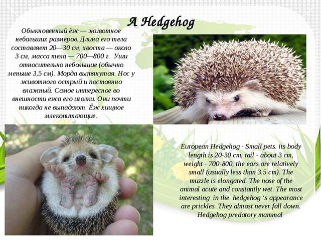 Обыкновенный ёж— животное небольших размеров. Длина его тела составляет 20—3...