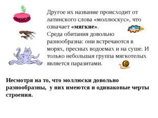 Другое их название происходит от латинского слова «моллюскус», что означает «