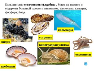 Большинство моллюсков съедобны . Мясо их нежное и содержит большой процент ви