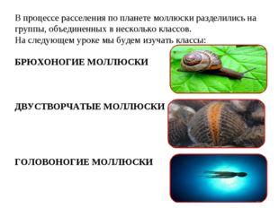 В процессе расселения по планете моллюски разделились на группы, объединенных
