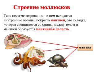 Тело несегментированно - в нем находятся внутренние органы, покрыто мантией,