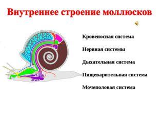 Кровеносная система Нервная системы Дыхательная система Пищеварительная систе