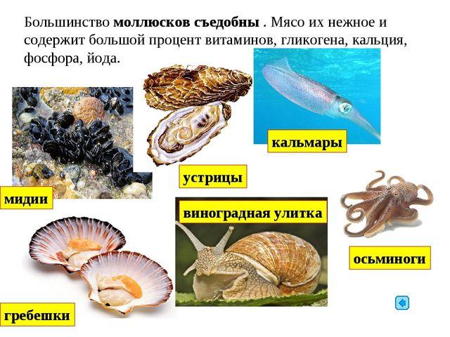 Большинство моллюсков съедобны . Мясо их нежное и содержит большой процент ви...