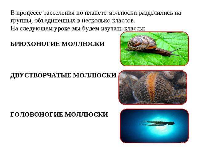 В процессе расселения по планете моллюски разделились на группы, объединенных...
